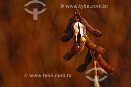 Assunto: Plantação de sojaLocal: Triangulo Mineiro - MGData: Março de 2008