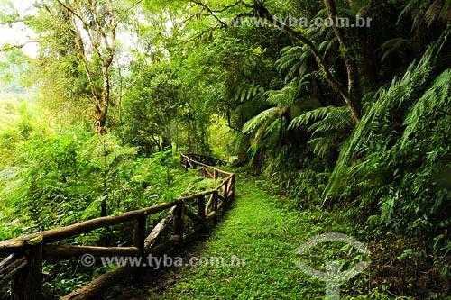 Assunto: Reserva Ambiental Parque AbaetéLocal: Santa Catarina - BrasilData: Março de 2008