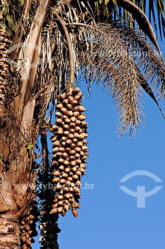 Assunto: Detalhe de coco de babaçú / Local: MA /  Data: 08/2008