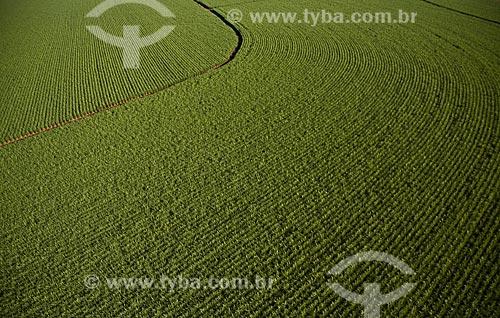 Plantação de cana de açúcar próximo à Ribeirão Preto - São Paulo - SP - Brasil / 2008  - Ribeirão Preto - São Paulo