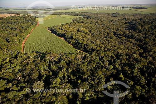 Plantação de cana de açúcar próximo à floresta nativa em Ribeirão Preto / 2008  - Ribeirão Preto - São Paulo