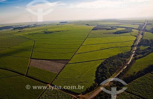 Plantação de cana de açúcar próximo à Ribeirão Preto - São Paulo - SP - Brasil / 2008  - Ribeirão Preto - São Paulo - Brasil