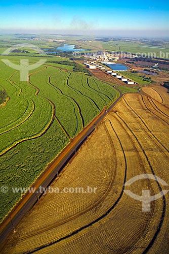 Assunto: Usina São Martinho - Tanques de armazenamento de Etanol ao fundo - Plantação de cana-de-açúcar à esquerda e área com cana- de-açúcar recém plantada à direita / Local: Pradópolis - São Paulo (SP) - Brasil  / Data: 09/2008