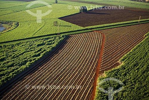 Assunto: Plantação de cana-de-açúcar na região de Ribeirão Preto / 2008