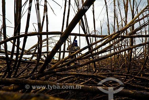 Assunto: Bóias frias cortando cana. Usina de Etanol e Açúcar São Manoel / Local: SP - Brasil / Data: Maio 2008