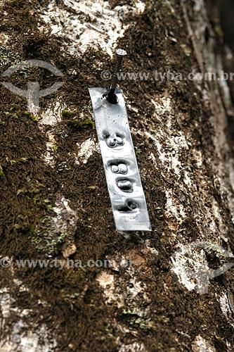 Assunto: Inventário de árvores para corte - madeira certificada / Local: Almerim (PA) / Data: 14 de Junho de 2006