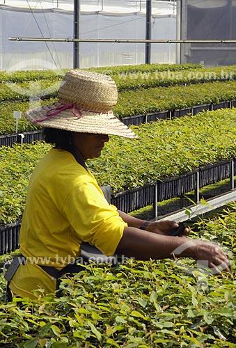 Assunto: Viveiro de eucalipto / Local: Almerim (PA) / Data: 16 de Junho de 2006