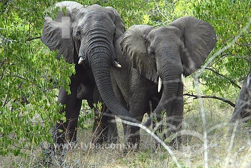 Assunto: Elefantes - Parque Hluhluwe Imfozoli / Local: Hluhluwe - Kwazulu Natal - África do Sul / Data: 14 de Março de 2007