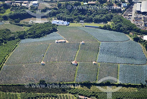 Assunto: Vista aérea de plantação de figo / Local: Campinas (SP) / Data: 11 de Abril de 2007