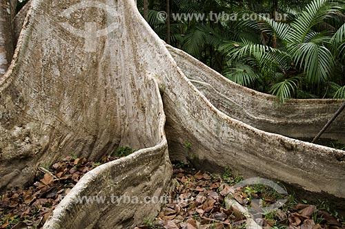 Assunto:  Árvore Samaúma (Ceiba pentranda) é considerada a