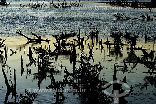 Assunto: Mangue no Berçário das Garças / Local: Cabo Frio (RJ) - Costa do Sol / Date: 22 de Junho de 2007
