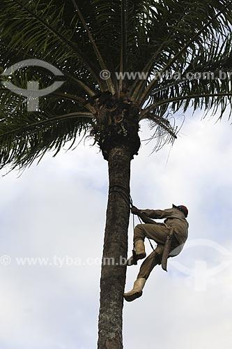 Assunto: Homem subindo em um dendezeiro (Elaeis Guineensis) / Local:  (BA) / Data: 17 de Julho de 2008