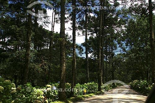 Assunto: Trilha para cachoeira no Parque Estadual de Campos do Jordão, também conhecido como Horto Florestal / Local: Campos do Jordão - SP - Brasil / Data: Março de 2009