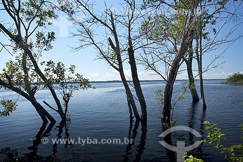 Assunto: Mata de igapó na época da cheia, nas ilhas da ESEC Anavilhanas / Local: Rio Negro - Amazonas (AM) - Brasil / Data: Julho 2007