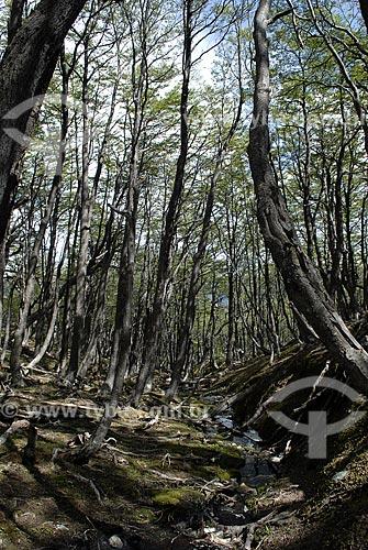 Assunto: Floresta de