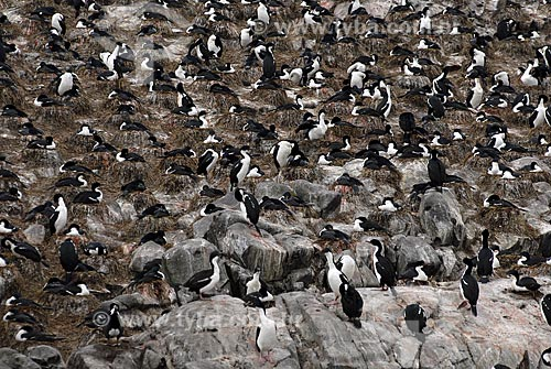 Assunto: Passeio de catamarã à Isla Los Lobos e ao farol do fim do mundo pelo Canal de Beagle. Turistas admirando os