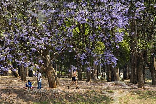 Assunto: Jacarandá Florido no Parque do Ibirapuera / Local: Iburapuera - São Paulo - São Paulo (SP) - Brasil / Data: Outubro de 2007