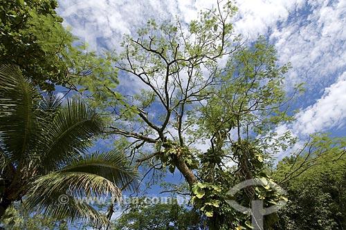 Assunto: Reserva Biológica Federal do Tinguá / Local: Nova Iguaçú - Rio de Janeiro (RJ) - Brasil / Data: 2008