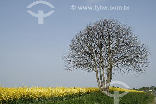 Assunto: Campo de cultivo de Colza / Local: Normandia - França / Data: 2007