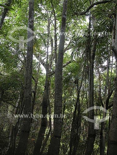 Assunto: Floresta de Igapó (mata inundada por água preta) - Lago de Silves - Perto do Rio Amazonas / Local: Perto de Silves - Amazonas - Brasil / Data: Setembro de 2003