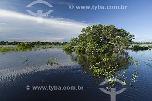 Assunto: Mata de Igapó na época da cheia - Lago Siriri - Estação Ecológica Anavilhanas - Rio Negro / Local: Amazonas (AM) - Brasil / Data: Julho de 2007