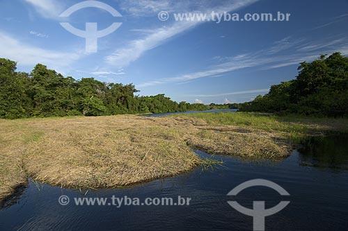 Assunto: Capim flutuante e mata de igapó na época da cheia - Estação Ecológica Anavilhanas - Rio Negro / Local: Amazonas (AM) - Brasil / Data: Junho de 2007