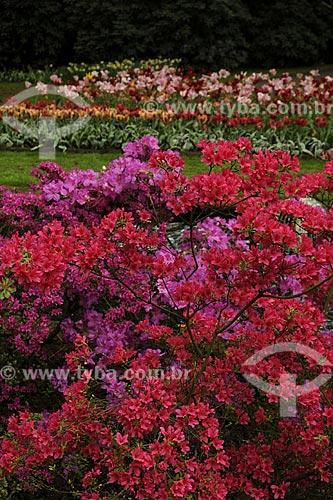 Assunto: Flores no parque Keukenhof, próximo à Amsterdam / Local: Keukenhof - Holanda / Data: Maio 2009