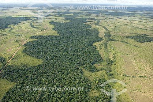 Assunto: Floresta amazônica de terra-firme no Lavrado de Roraima, a noroeste de Boa Vista, na direção da ilha de Maracá / Local: Roraima (RR) - Brasil / Janeiro de 2006