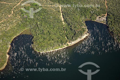 Assunto: Árvores mortas pelo inundamento da represa do Lajeado, perto de Palmas / Local: Tocantins (TO) - Brasil / Data: Junho de 2006