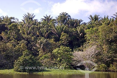 Assunto: Palmeiras na beira do rio Amazonas na floresta amazônica de terra-firme perto de Terra Santa / Local: Pará (PA) - Brasil / Data: Junho de 2006