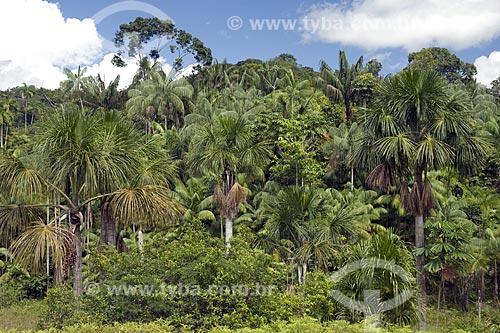 Assunto: Palmeiras amazônicas (buriti, açaí e patauá), na beira da BR-174 (Manaus - Boa Vista) / Local: Amazonas (AM) - Brasil / Data: Junho de 2006