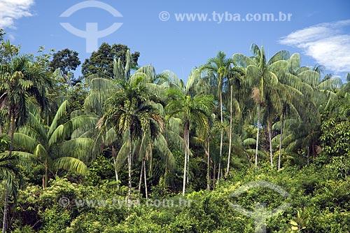 Assunto: Palmeiras amazônicas (buriti, pupunha e açaí) na BR-174 (Manaus - Boa Vista) / Local: Amazonas (AM) - Brasil / Data: Junho de 2006