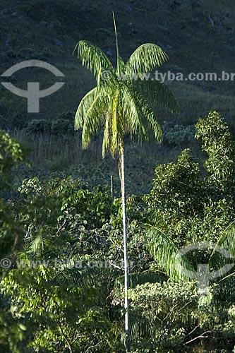 Assunto: Palmito (Euterpe edulis) no PARNA (Parque Nacional) Chapada dos Veadeiros no cerrado de Goiás / Local: Goiás (GO) - Brasil / Data: Junho de 2006
