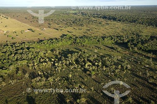 Assunto: Carnaubal (Copernicia prunifera) atestando sua presença no Cerrado Local: Mato Grosso (MT) - Brasil / Data: Junho de 2006