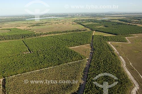 Assunto: Projeto de reflorestamento no lavrado de Roraima, perto de Boa Vista / Local: Roraima (RR) - Brasil / Data: Janeiro de 2006