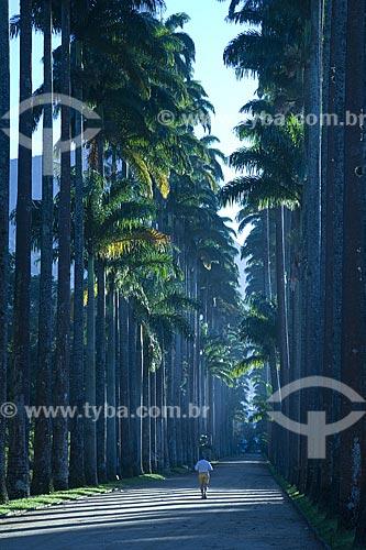 Assunto: Caminho de palmeiras-imperiais (Roystonea regia) na frente do Jardim Botânico do Rio de Janeiro / Local: Rio de Janeiro - RJ - Brasil / Data: Agosto de 2006