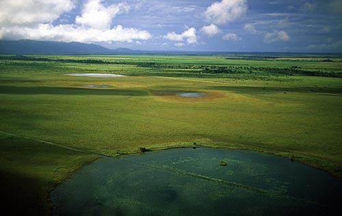 Assunto: Lavrados (campos alagados)  / Local: Roraima (RR) - Brasil / Data: Março, 2009