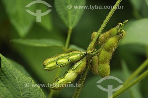 Assunto: Plantacao de soja / Local: Fazenda Juparana - Paragominas - Pará - Brasil / Data: 31-03-2009