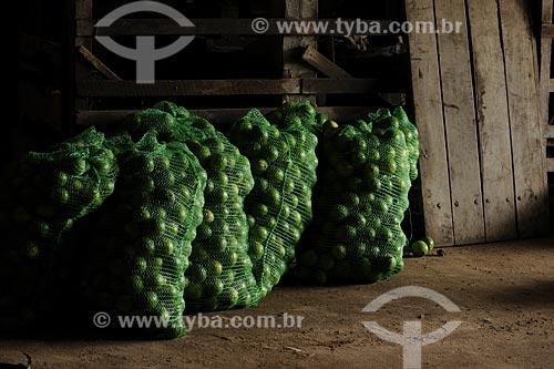 Assunto:  Limão em saco destinado ao comercio / Local: Tomé-Açu - Pará - Brasil / Data: 01-04-2009