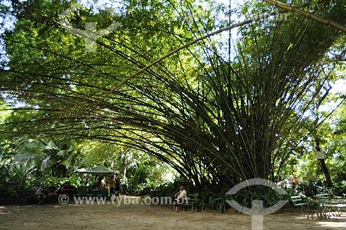 Assunto: Bambu-da-China (Bambusa vulgaris), Graminea /  Local: Museu Paraense e Parque Botânico Emílio Goeldi - Belém - Pará - Brasil / Data: 05-05-2009