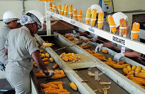 Asunto: Despalhe de espigas de milho / Local: Paracatú - Minas Gerais (MG) / Data: Setembro 2008