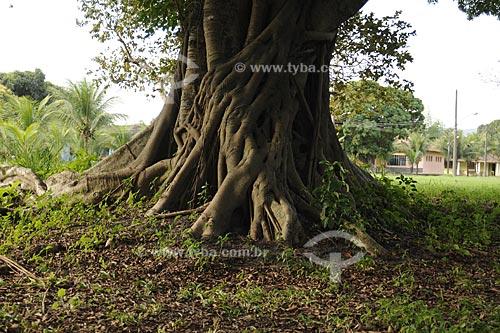 Assunto: Tronco de árvore - Colônia Juliano Moreira / Local:  Jacarepaguá - Rio de Janeiro - RJ  / Data: 27/07/2009
