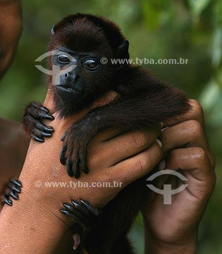 Assunto: Pequeno Bugio (Alouatta sp.)   / Local:  Amazonas (AM) - Brasil  / Data: 20/04/2008