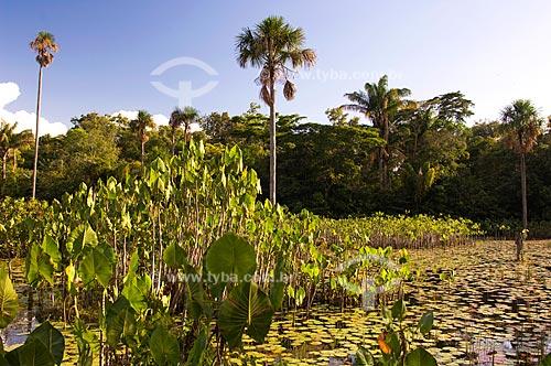 Assunto: Área alagada com Aninga (Montrichardia arborescens), buritis e vegetação aquática  / Local:  Estrada Boa Vista-Bonfim - Roraima - Brasil  / Data: Janeiro de 2006
