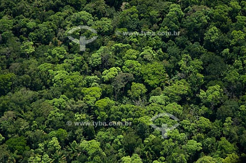 Assunto: Vista aérea da floresta amazônica de terra-firme   / Local:  Mucajaí - Roraima - Brasil  / Data: Janeiro de 2006