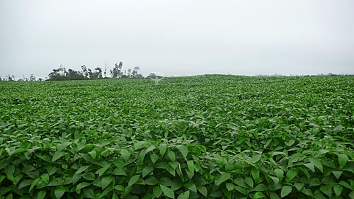 Assunto: Plantacao de soja  / Local:  Fazenda Juparana - Paragominas - Para - Brasil  / Data: 31/03/2009