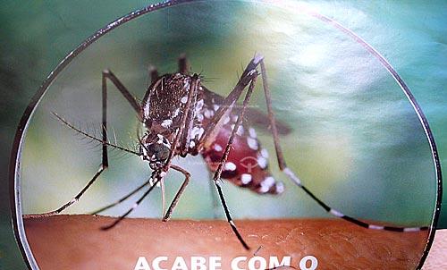 Assunto: Poster da campanha contra o mosquito da dengue (Aedes aegypti)  / Local:  Paragominas - Para - Brasil  / Data: 31/03/2009