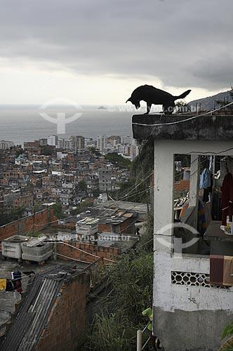Assunto: Silhueta de cachorro sobre telhado de casa no Morro Pavão Pavãozinho com prédios do bairro de Ipanema ao fundo / Local: Rio de Janeiro / Data: outubro 2009