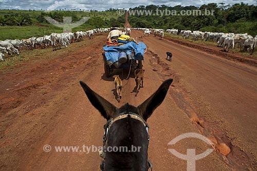Assunto: Gado na BR-163  / Local:  Sul do Pará (PA)  / Data: Abril de 2009