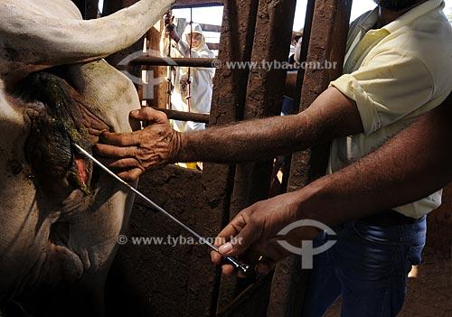 Assunto: Inseminação artificial do gado em Fazenda de Gado no interior de São Paulo  / Local:  São Paulo - Brasil  / Data: 03/2008